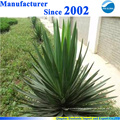 100% pure natural yucca schidigera powder extract