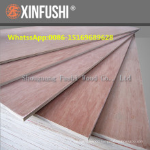 Africa market Bintangor veneer faced commercial poplar core Plywood