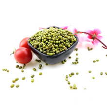 Gros haricot vert séché / haricot rond, type de germination