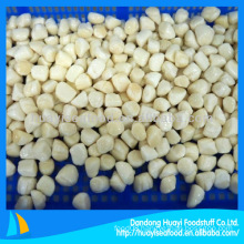 frozen boiled bay scallop adductor