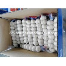 Alho Branco Puro 6p 5,5cm
