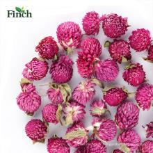 Finch nouvelle arrivée bourgeons de fleurs à base de plantes Gomphrena Globosa Tea