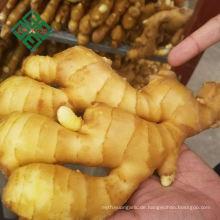 hochwertiger Ingwer frischer chinesischer Ingwer
