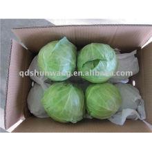 1.5-2.5kg fresh cabbage