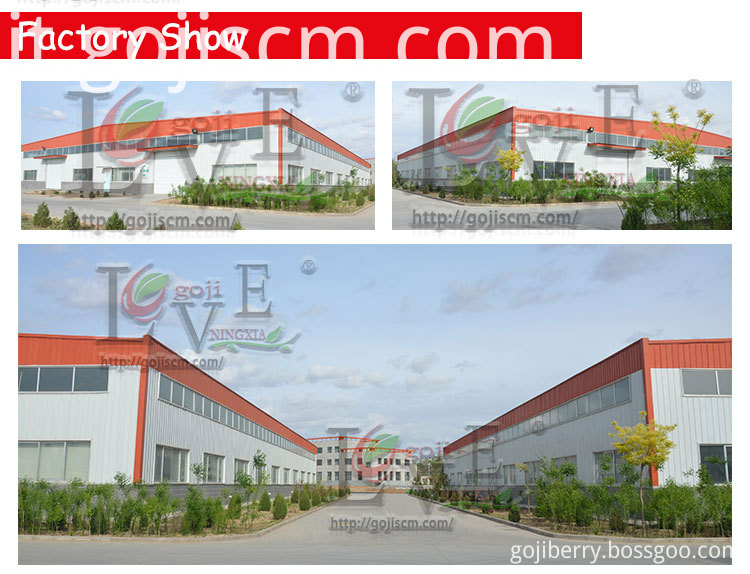 Non GMO Goji Berries factory base