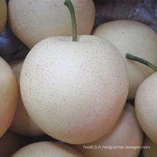 Poire dorée fraîche / poire couronne en provenance de Chine