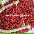 Makanan Super Wholesale Red Wolfberry kering