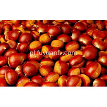 Professional Exporting New Season 70-90 Size Fresh Chestnut