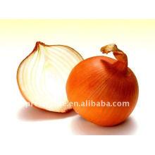 Exportador de Cebolla Roja Fresca