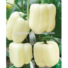 MSP041 Baidi hybrid white color sweet pepper seeds in hybrid seeds