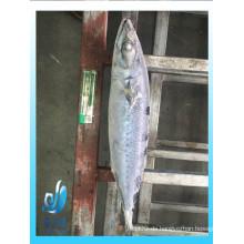 Gefrorene pacific mackerel ganze runde