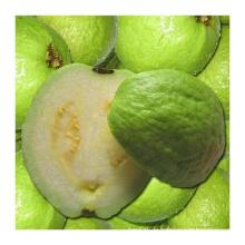 250ml Guave Pulpy Saft trinken
