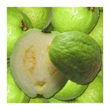 250ml Guave Pulpy Juice Drink
