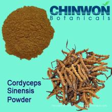 Améliorateur de l'immunité Cordyceps Sinensis Powder