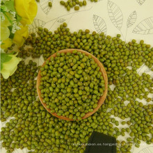 2016 nueva cosecha pequeña verde frijol mungo para brotes, origen chino