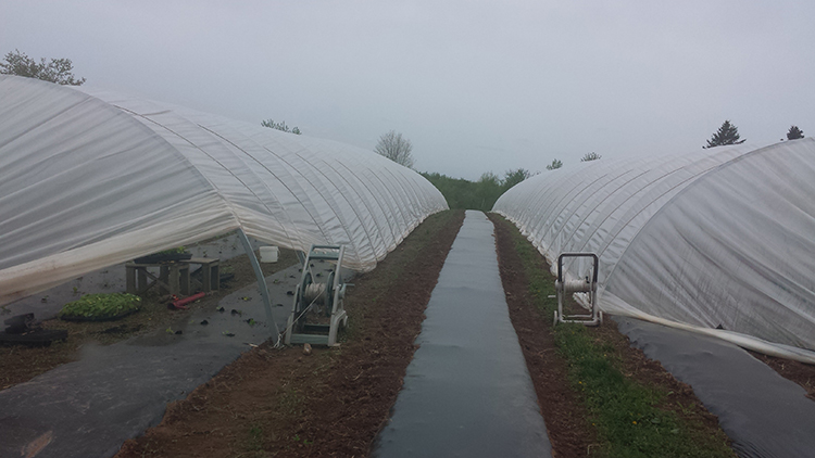 Greenhouse film tension rope