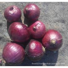 Chinese Shallot /Fresh Shallot Onions