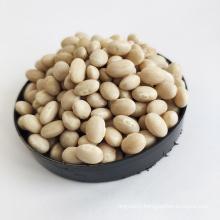 For Sale Market Price New Crop White Navy Kidney Beans