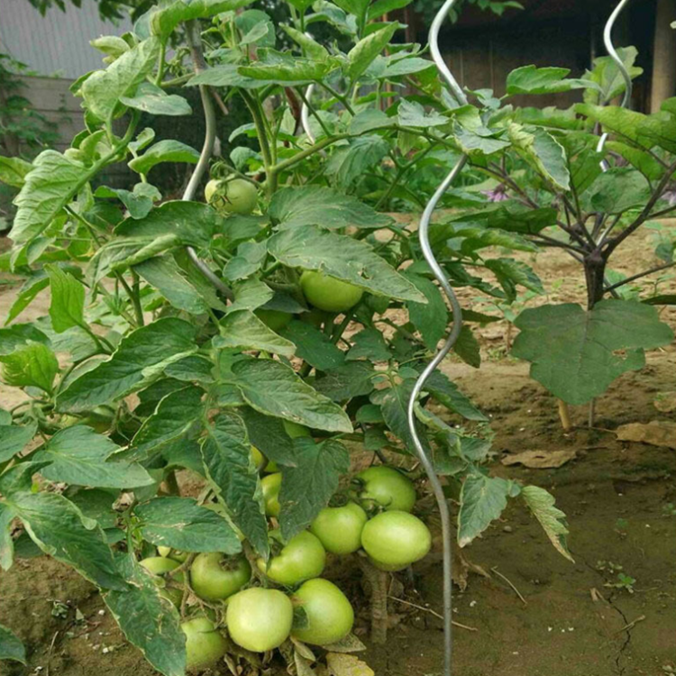 Power Coated 7Mm Tomate Spiral Stakes