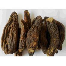 Cistanches Herba de alta calidad