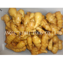 High Quality Global Gap Fresh Ginger