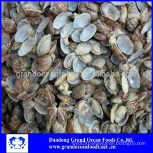 Frozen cooked clam in shell