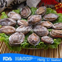 Abalone silvestre en conchas al por mayor