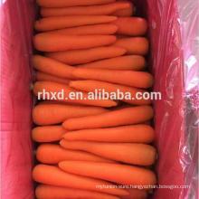 orange red chinses carrot fresh carrot