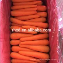 оранжевый красный китайской моркови свежей моркови