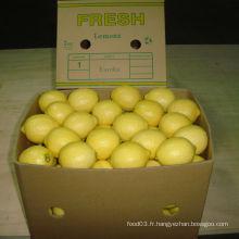 Qualité exportée de citron frais chinois /