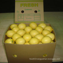 Exported Quality of Chinese Fresh Lemon/