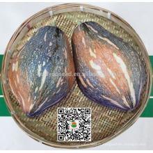 PU15 Xiangyu grande saveur supérieure hybride douce graines de citrouille pour la plantation