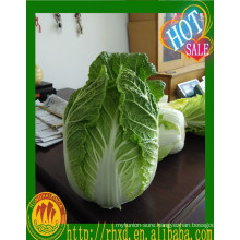 Healthy cabbage