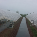 300m Greenhouse Polyester Film Band