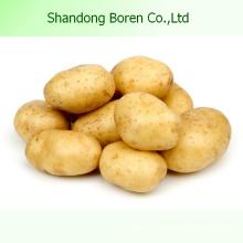 Китайский высококачественный свежий картофель