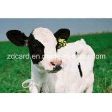Tag animal usado na orelha para a gerência
