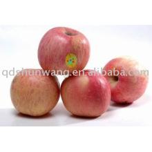 Yanti deliciosa manzana Fuji para la alta cantidad