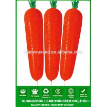 NCA012 Waiyan Black carottes graines prix des graines de Chine