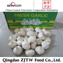 Jinxiang Chinese 5.5cm up Fresh White Garlic for Egypt Market (10kg Carton Packing)