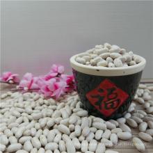 Haricots blancs de marine Qualité chinoise meilleur prix Haricots blancs
