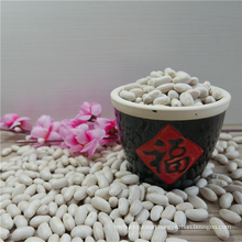 White Navy Beans Chinese Quality Best Price Navy Bean