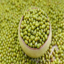 Green Mung Beans of China Origin