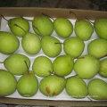 Boa Qualidade de Fresh Green Ya Pear