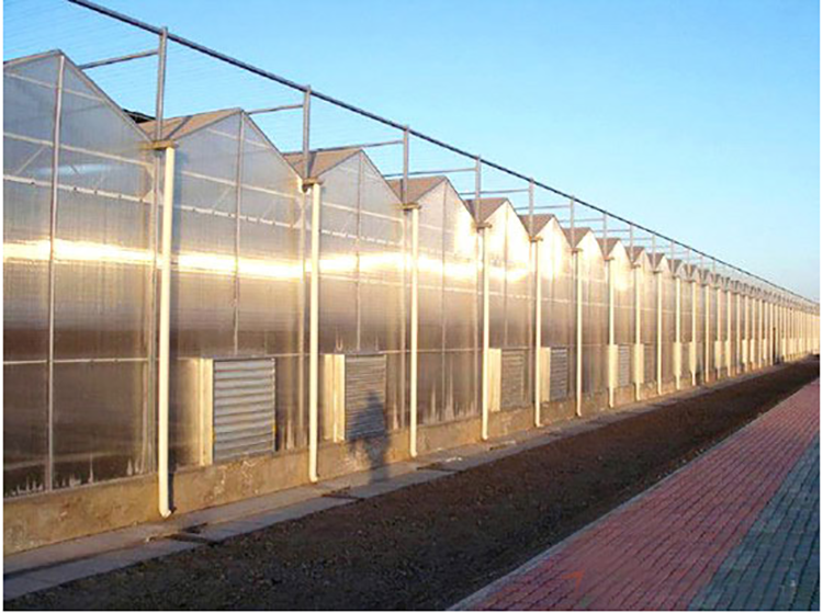 Multi-Span Agricultural Greenhouses