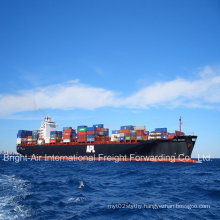 Cheap Sea Freight Containers Shipping Service From China to Czech