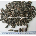 Acmefate bulk price of Chinese wholesale striped sunflower seeds