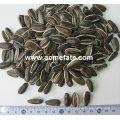 Acmefate preço a granel das sementes de girassol listradas atacadistas chinesas
