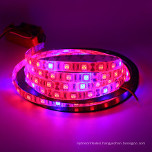 5050 DC12v 5M/roll led grow light strip for plants