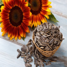 Chinesische beste rohe Sonnenblumensamen