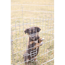 Galvaniserad 6 eller 8 maskor Pet Dog Playpen